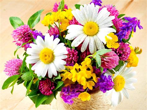 Fresh Flowers by Beautiful Fresh Flowers Flowers Wallpapers