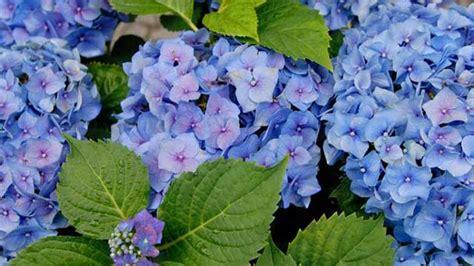 gartenpflanzen pflegeleicht gartenpflanzen setzen und pflegen garten passend bepflanzen