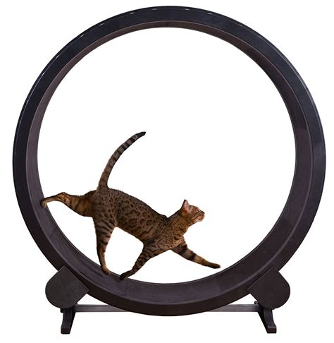 exercise wheel 10 best cat toys that are guaranteed keep your kitties entertained