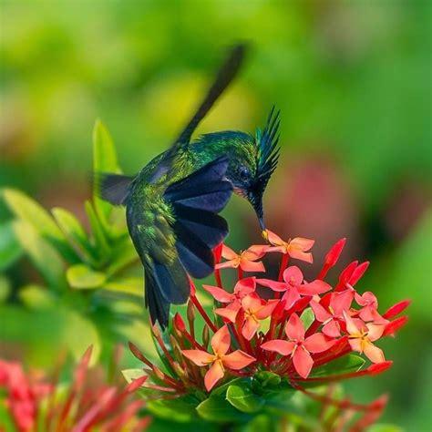 imagenes de flores y animales arcoiris era dorada naturaleza animales bellos fotos