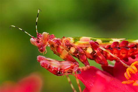 praying mantis colors praying mantis it seems that it takes on the color