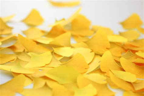 yellow mood appree ginkgo leaf it bookmark memo pads