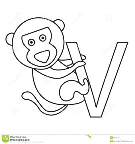 vervet monkey coloring page illustrator of v vervet monkey stock vector image 85521293
