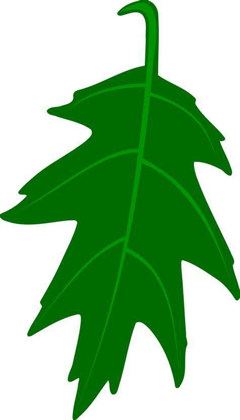 big leaf clipart clipground