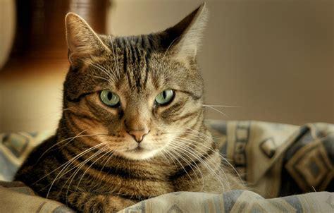 wallpaper mac cat mac screensaver downloads cats iphone 5 wallpapers