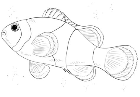 Galerry coloring page of clown fish