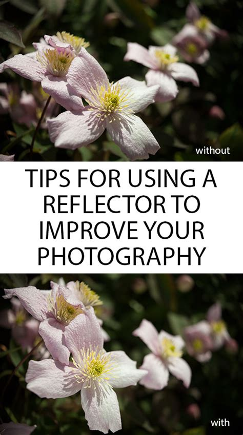 8 Tips On Improving Your Photography Skills by Tips For Using A Reflector To Improve Your Photography