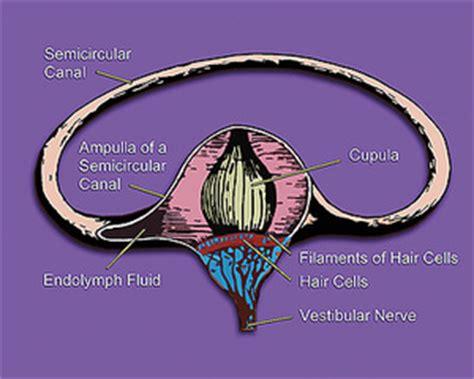 Define Cupula Ear Outer Ear Middle Ear Inner Ear Membrane Canal