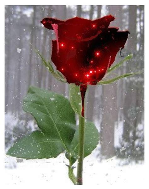 imagenes d rosas en movimiento descargar imagenes de rosas hermosas gratis imagen de