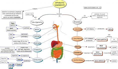 tempo digestione alimenti aiutare la digestione