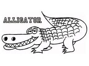 alligator great pictures