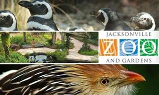 6 for jacksonville zoo admission jacksonville zoo and
