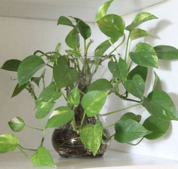 most common flowering house plants indoor houseplants pictures and names popular house