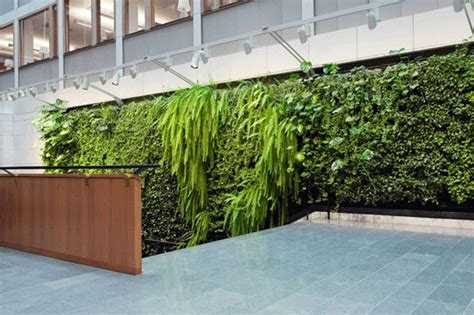 interior plant wall diy indoor plant wall living walls the ultimate trend