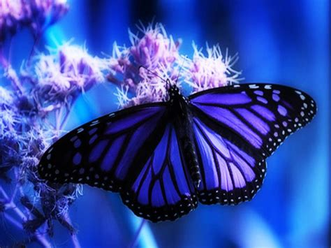 imagenes de mariposas de verdad fotografias de mariposas y flores fotografias y fotos