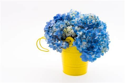 foto di fiori da scaricare ortensia bouquet di fiori isolato scaricare foto gratis