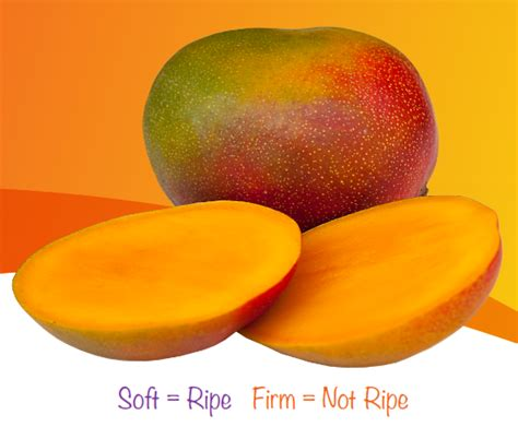 what color is a ripe mango mango ripeness or ripening guide