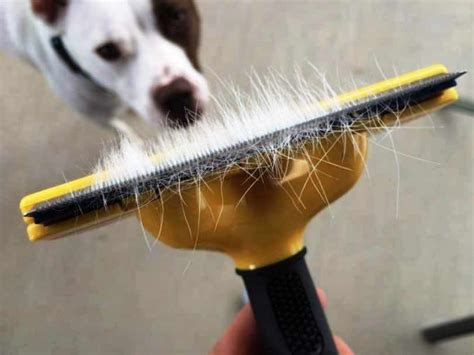 how to remove dog hair from car upholstery best way to remove dog hair from car methods for clean car