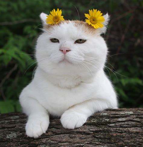 and cats cats flowers kittens frida kahlo catsbeaversandducks