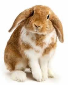 Baby Bunnies In Backyard - raising rabbits as pets animals grit magazine