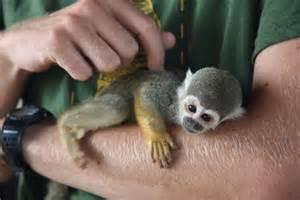 small tiny monkey fella photo