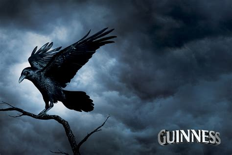 stephen cribbin subtle composites guinness the raven