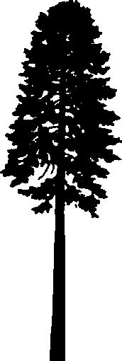 douglas fir tree silhouette tattoo tuesday pinterest