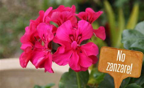 piante da giardino contro le zanzare piante anti zanzare quali coltivare ora nel balcone e nel