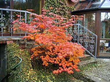 Garten Schlitz by Www Roege De