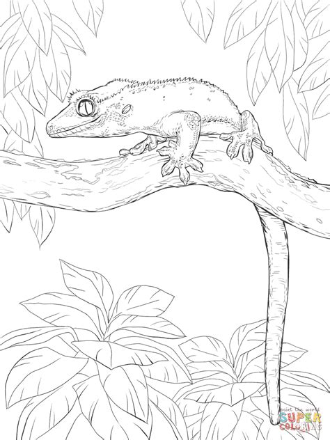 Coloring Page Gecko by Crested Gecko On A Tree Coloring Page Free Printable