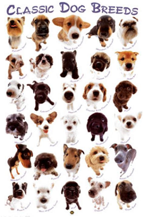 all different dogs all different types of breeds