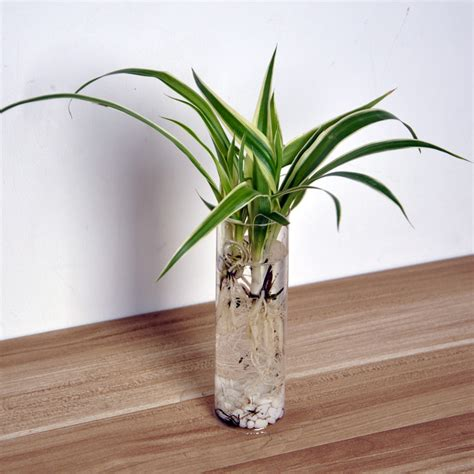 Vase Sepeda Anyaman Bunga Hias home living room decor clear cylinder glass flowerpot mini wall hanging flower water plant vase