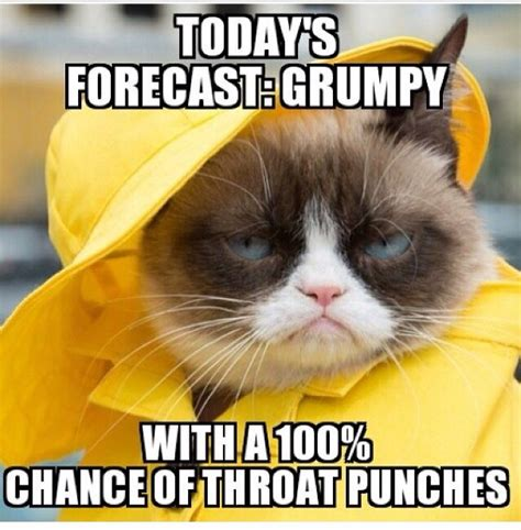 Grumpy Memes - the 25 best tomorrow s forecast ideas on pinterest