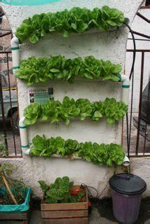 hydroponic vertical garden at sembradores urbanos