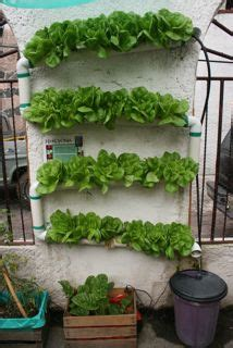 hydroponic vertical garden  sembradores urbanos