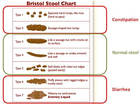 Bristol Stool Scale Type 1 by Bristol Stool Scale Type 1 Related Keywords Bristol