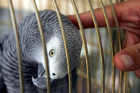 common diseases in pet birds explained