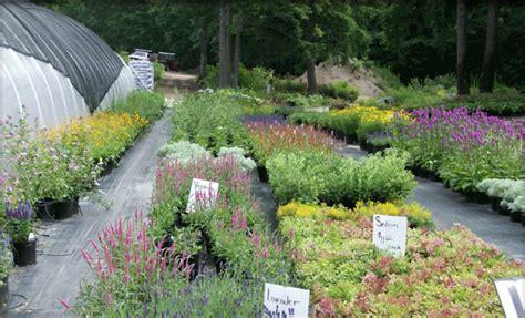 Garden Nh Henniker Nh Perennials Stonefalls Gardens Plants For
