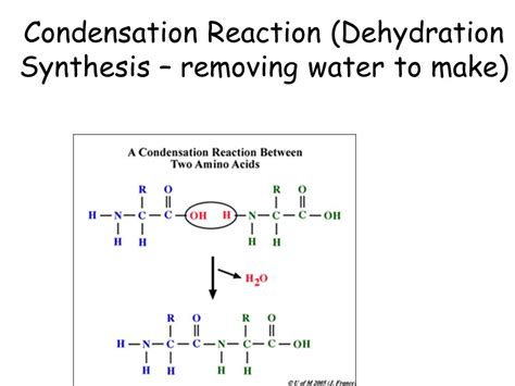 condensation or dehydration bio boot c biochemistry topic ppt