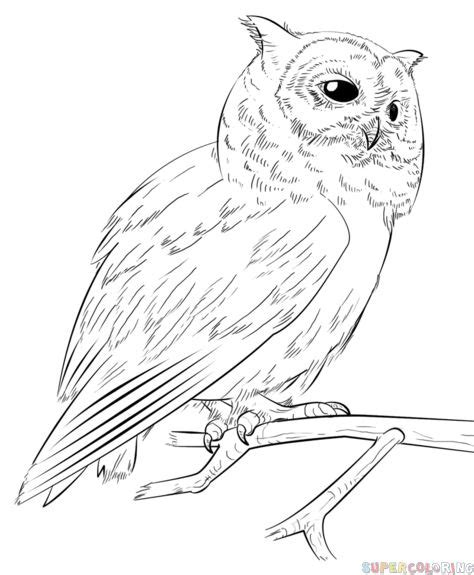 Snowy Owl Kit168 ä á Chæ I M 244 H 236 Nh GiẠY Miá N Ph 237 - 17 best ideas about drawing pictures for on