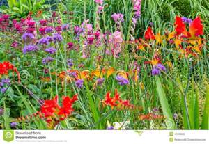 fleurs sauvages de jardin de pays photo stock image
