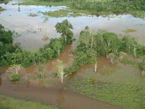 amazonas hängestuhl m 225 s de 14 000 ha de cultivos se perdieron en alto amazonas