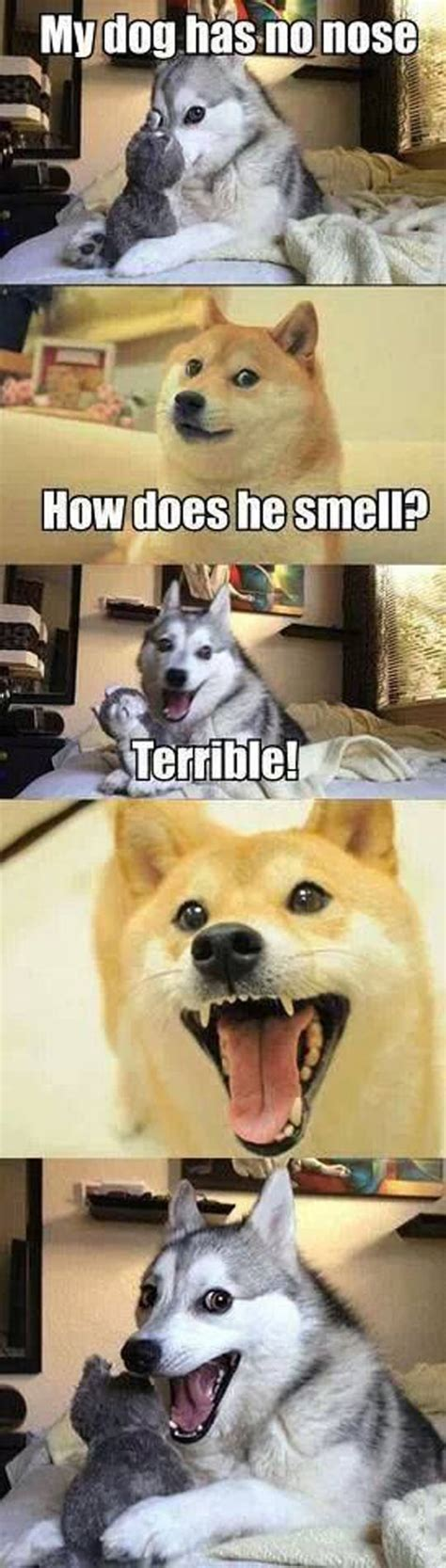 Such Dog Meme - wow such funny many jokes