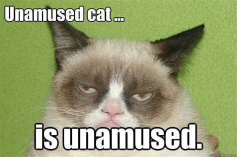 Unamused Meme - unamused cat is unamused misc quickmeme