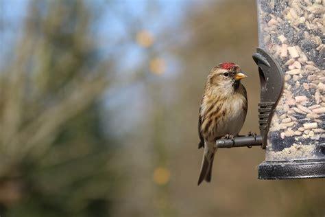 the best bird feeders for winter the gilligallou bird