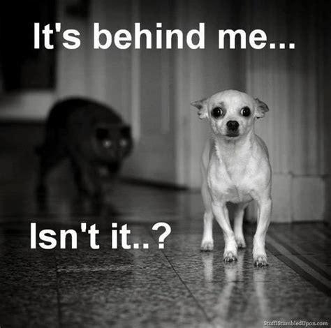 Funny Scary Memes - creepy scary animals
