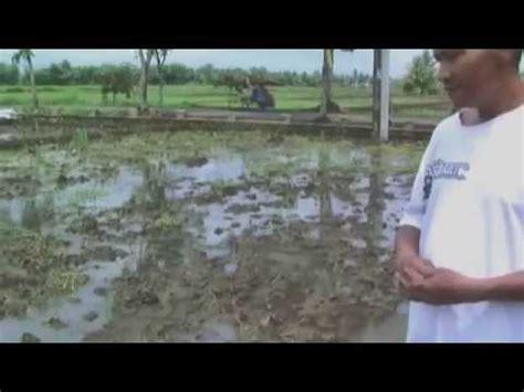 Jual Tanah Gembur jual nitrobacter 081391400500 tanah sawah rusak keras jadi