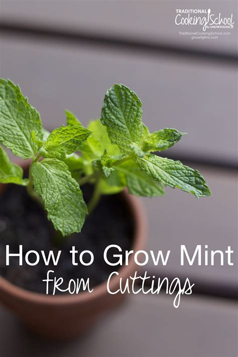 hardest plant to grow how to grow mint from cuttings 2 methods
