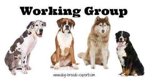 working breeds working dogs breed list