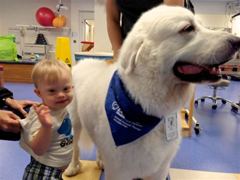 for dogs to be a therapy 5 benefits of using a therapy for children